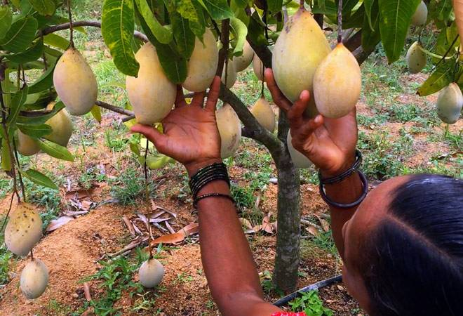 Greater Exploits - How A MANGO TREE was HEALED by the WORD of FAITH and Produced! You Too Can!